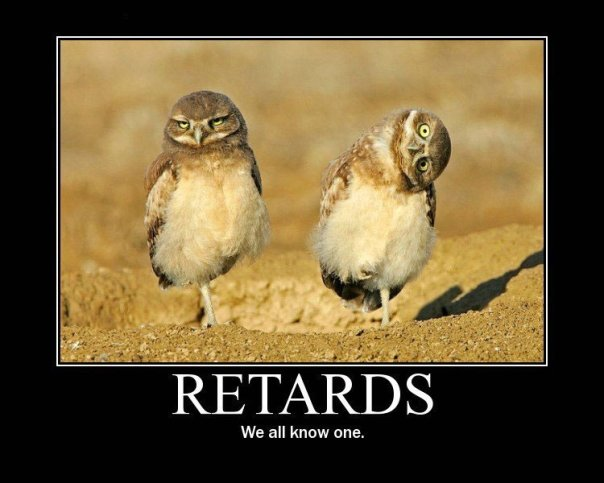Funny owl picture
