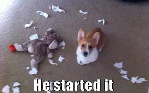 funny dog caption pic