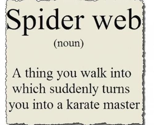 funny definition of spider web
