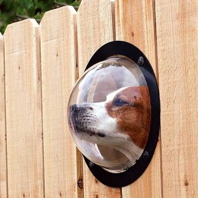 funny dog window in fence picture