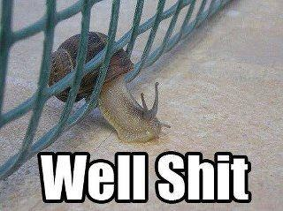 funny well shit snail stuck fence