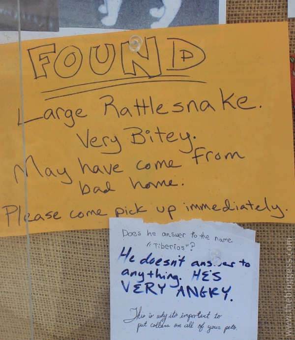 funny very angry bitey snake found note sign