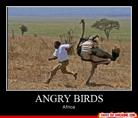 funny angry birds in africa