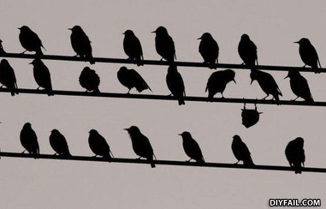funny bird upside down on a wire fail pic