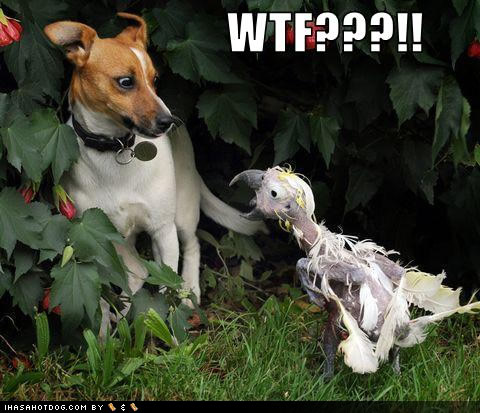 Funny wtf dog ugly bird caption picture