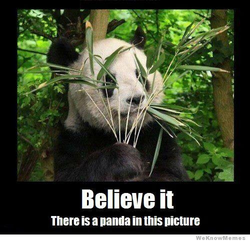 Funny pandas with captions funny pandas with captions photo8 voltagebd Image collections