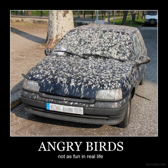 funny angry birds car poop car