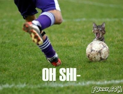 funny soccor ball cat picture