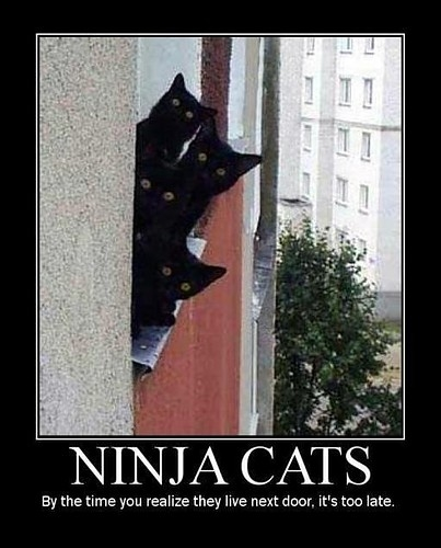 funny ninja cats caption pictures