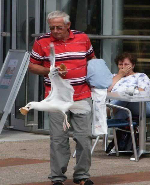 funny seagull stealing ice cream fail pic