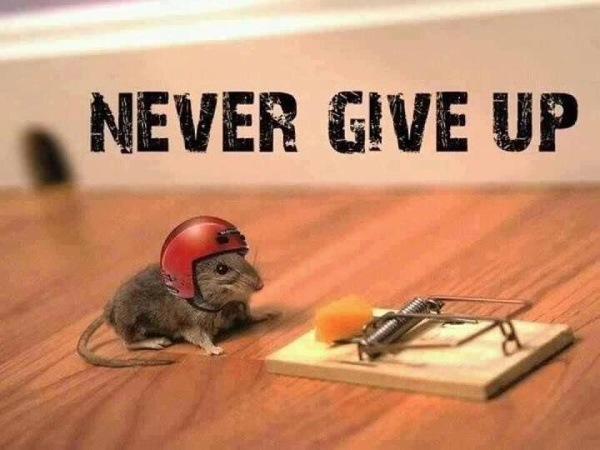 funny never give up photo