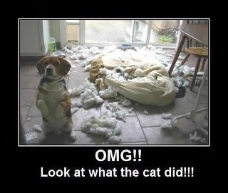 funny look what the cat did caption picture
