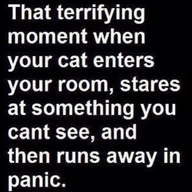 funny quote cat stares at something and runs away