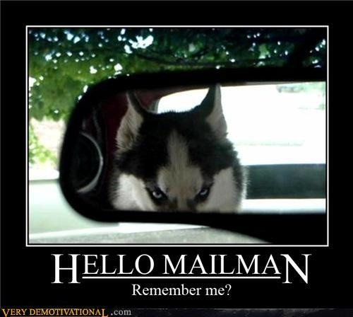 funny hello mailman angry dog in backseat of car caption photo
