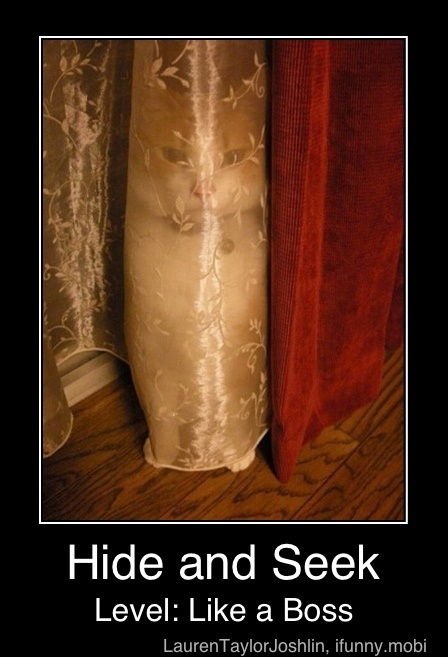funny cat behind curtain hiding photo