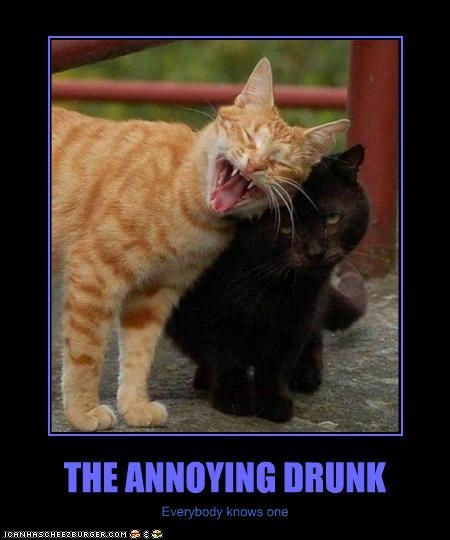 the annoying drunk funny cat photo