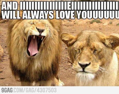 I will always love you funny lion caption pictures