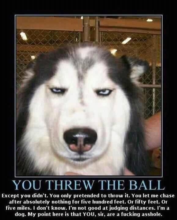 funny dog pissed you threw the ball caption photo