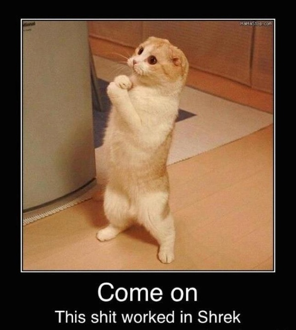 come on this worked in shrek cute cat standing up caption photo