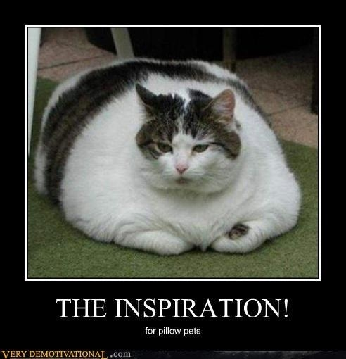 funny cat caption fat cat inspiration for pillow pets photo