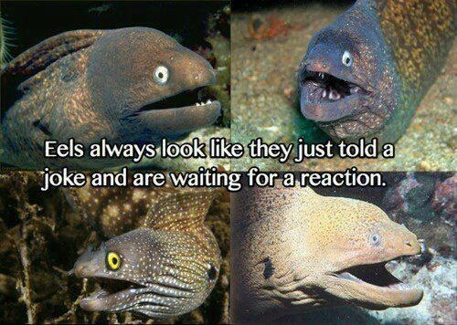 funny eels always look like they told a joke and are waiting for a reaction photo