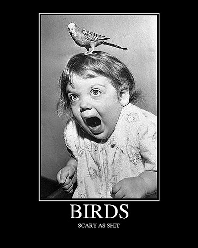 funny birds scary caption picture