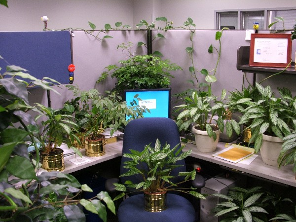 funny fill cubicle with office plants prank