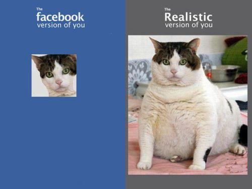funny cat caption picture facebook realistic photo of you