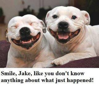 funny smile jake two dogs smiling caption picture