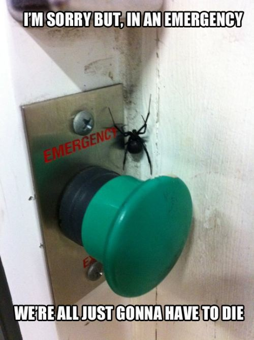 funny emergency button covered by spider we all have to die caption