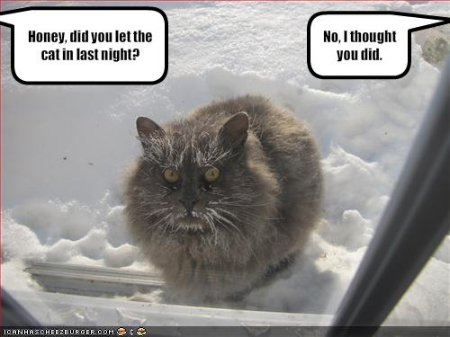 funny cold cat left out all night in the snow picture