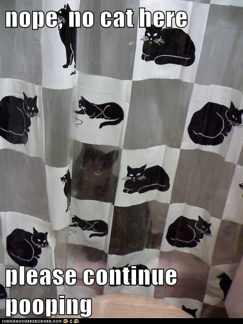 funny cat hiding in behind cat shower curtain photo