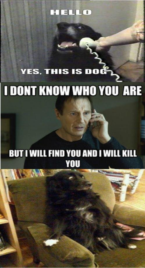 funny this is dog dog scared won't call again caption picture