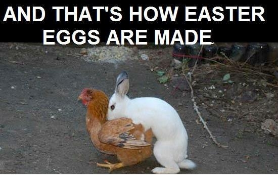funny thats how easter eggs are made rabbit humping chicken caption