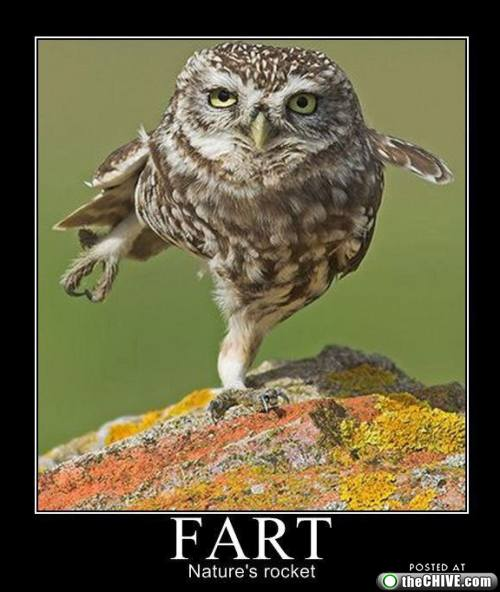 funny fart natures rocket owl picture