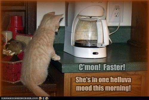 funny c'mon faster she's in one hell of a mood this morning cat coffee maker caption picture