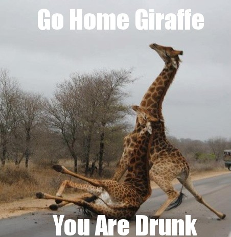 funny go home giraffe you are drunk caption picture