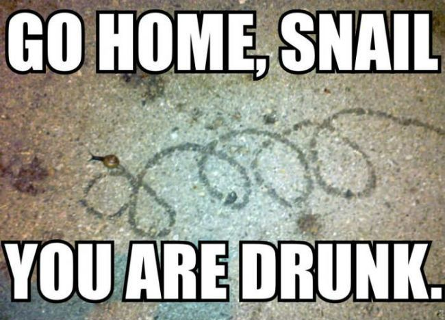 funny go home snail you are drunk funny caption picture