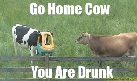 Funny go home cow you are drunk funny caption picture