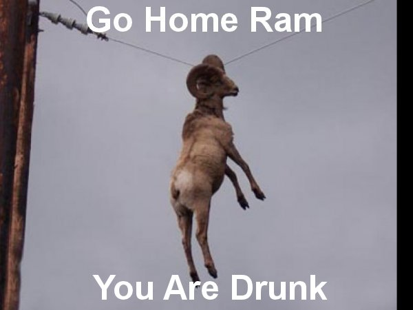 go home ram you are drunk funny caption picture