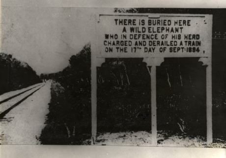 funny photo buried here an elephant that derailed a train protecting its herd