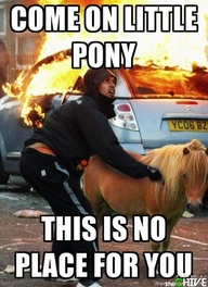 funny caption picture c'mon little pony this is no place for you
