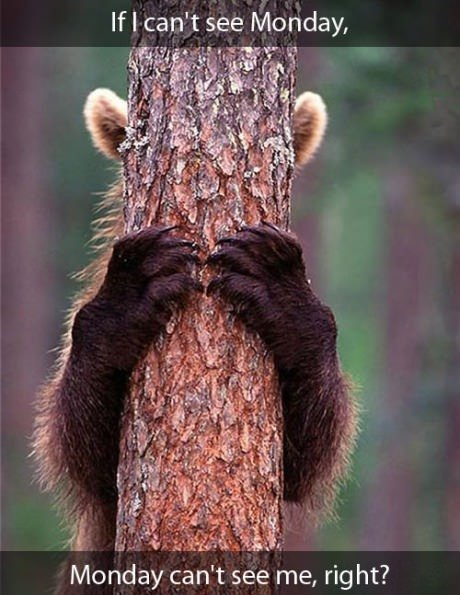funny caption picture bear behind tree if i can't see monday it can't see me