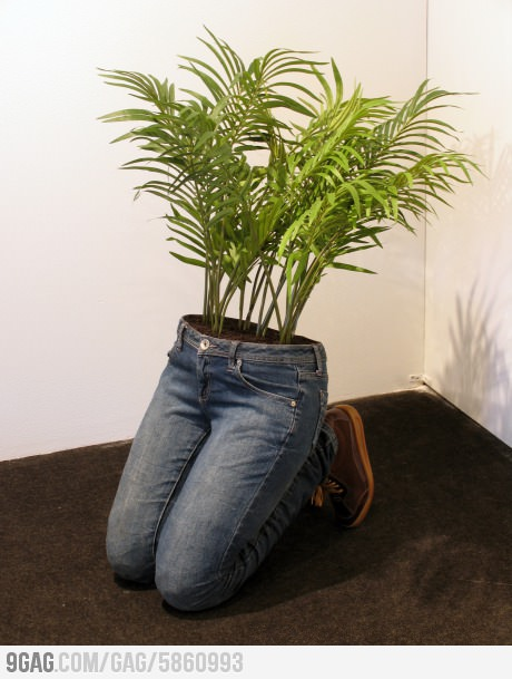 funny creative planter plant growing out of jeans shooes