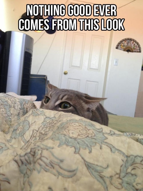funny cat caption picture nothing good ever comes from this look
