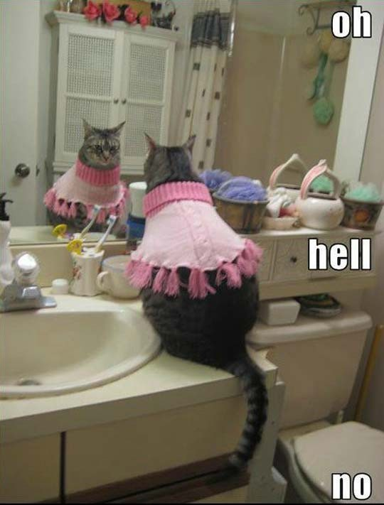funny cat caption  in mirror wearing sweater oh hell no