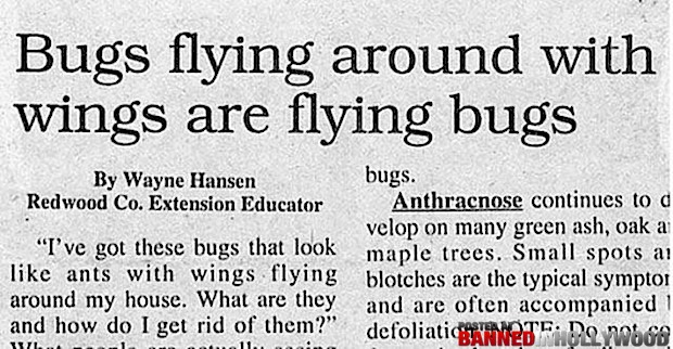 funny headline bugs flying around with wings are flying bugs