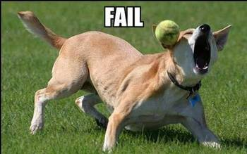 funny dog fail dog completely misses thrown ball
