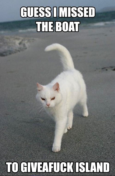 funny cat caption guess i missed the boat to