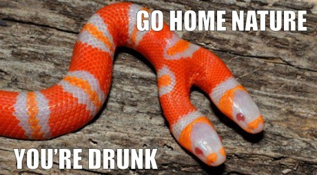 funny go home nature you are drunk 2 headed snake